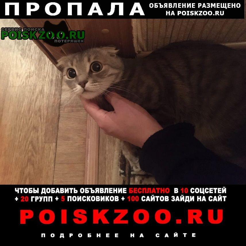Пропала кошка британка, вислоухая Курск