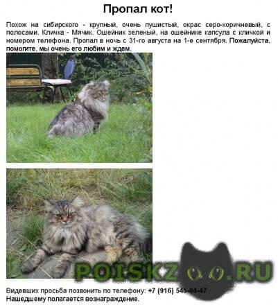 Пропал кот мо, загорянка.  г.Загорянский