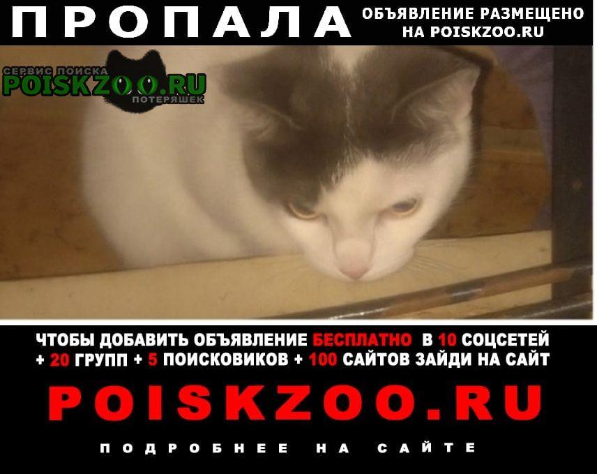Пропала кошка кошечка, выбежала из квартиры в Москва