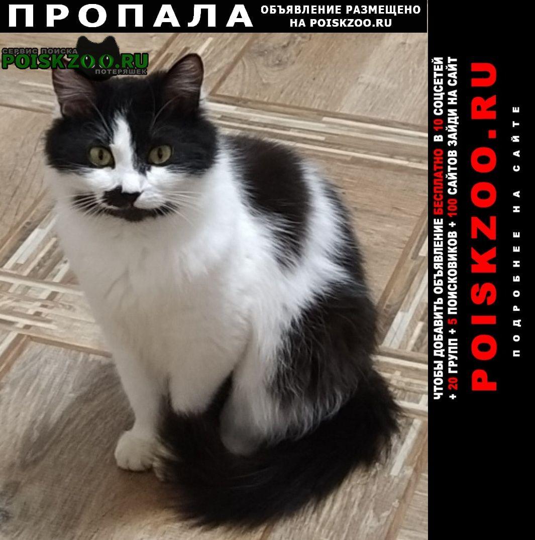 Пенза Пропала кошка