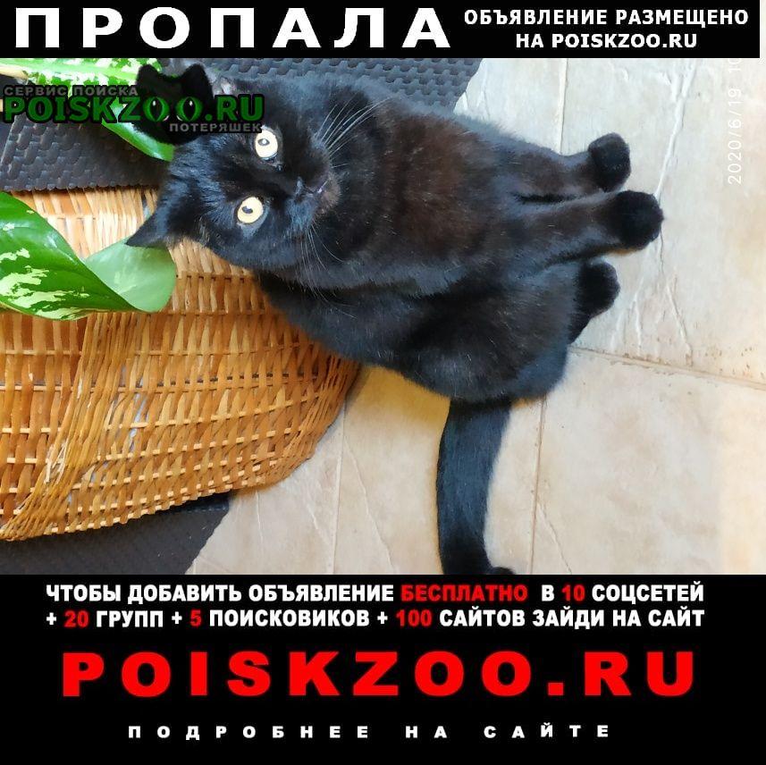 Пропала кошка 27 августа Москва