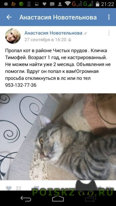 Пропал кот тимофей, 1год г.Киров (Кировская обл.)