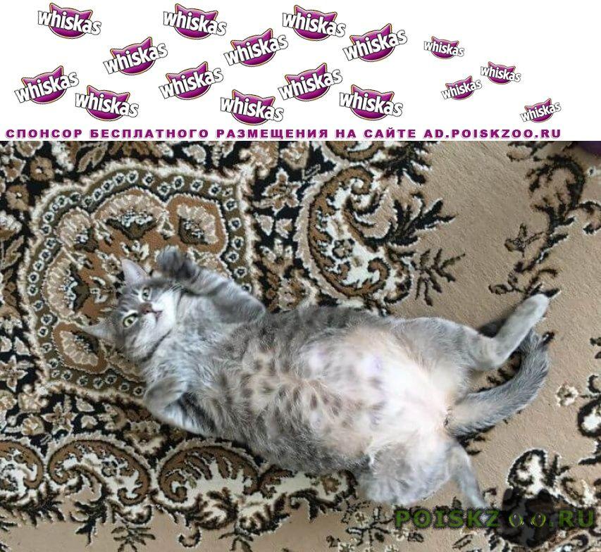 Пропала кошка Арамиль