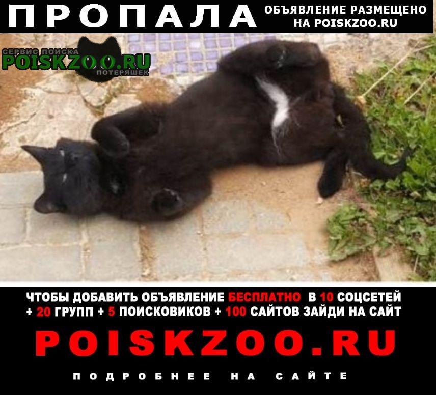 Пропала кошка кот черный.. Звенигород