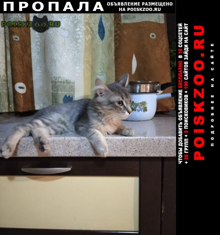 Пропала кошка серый кот Удельная