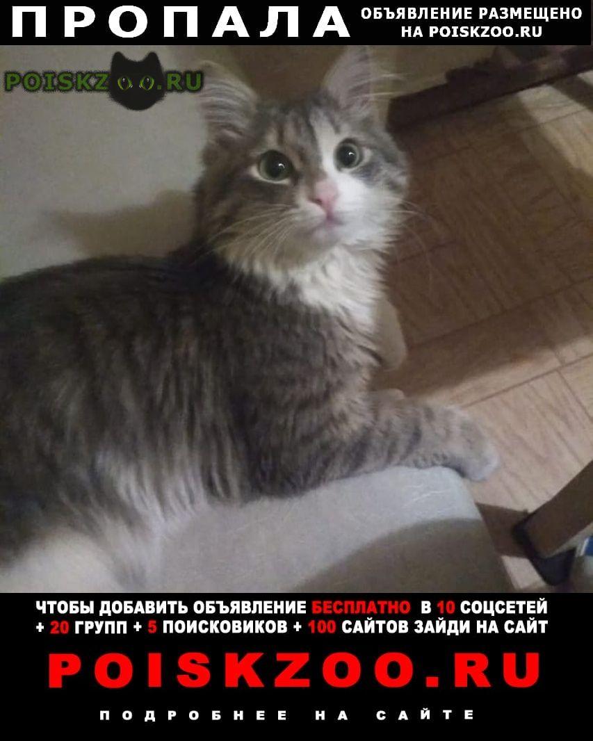 Пропал кот г.Немчиновка