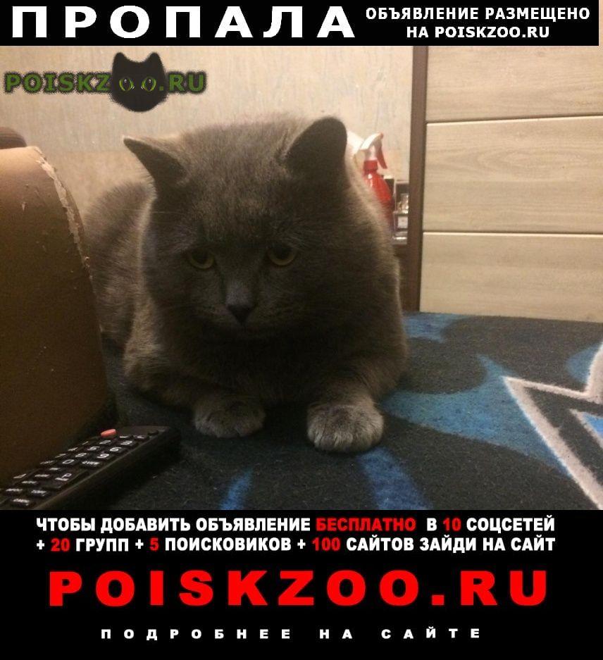 Пропал кот г.Хабаровск