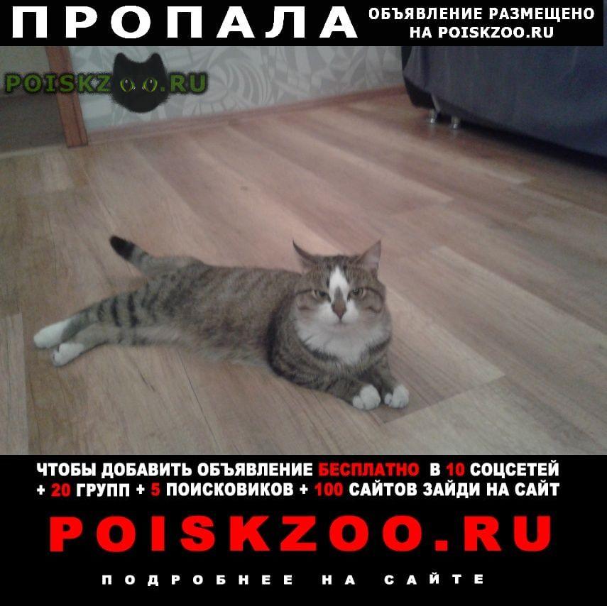 Пропал кот г.Братск