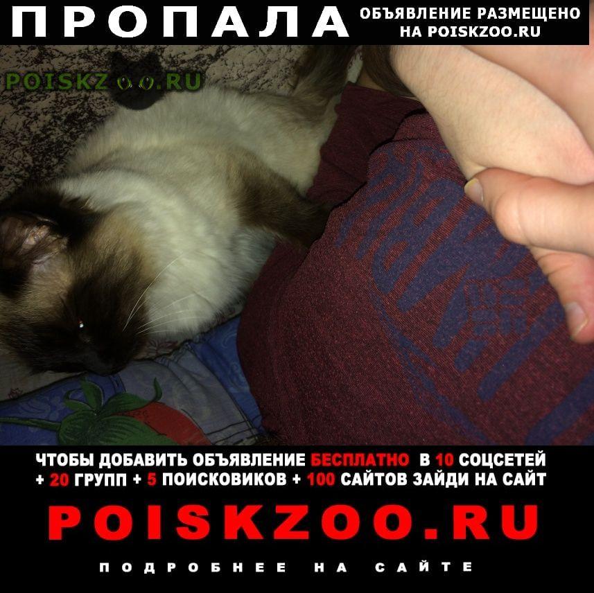 Пропала кошка сиамская, в районе транспортной Сочи