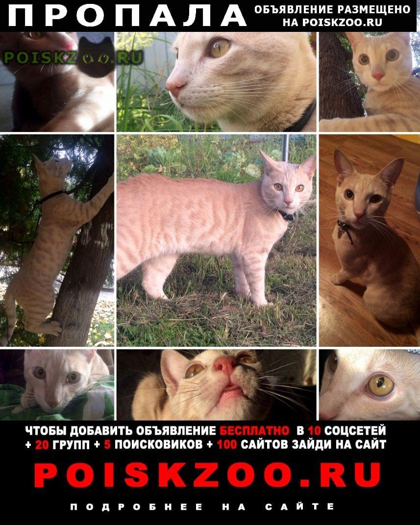 Пропала кошка кот г.Раменское