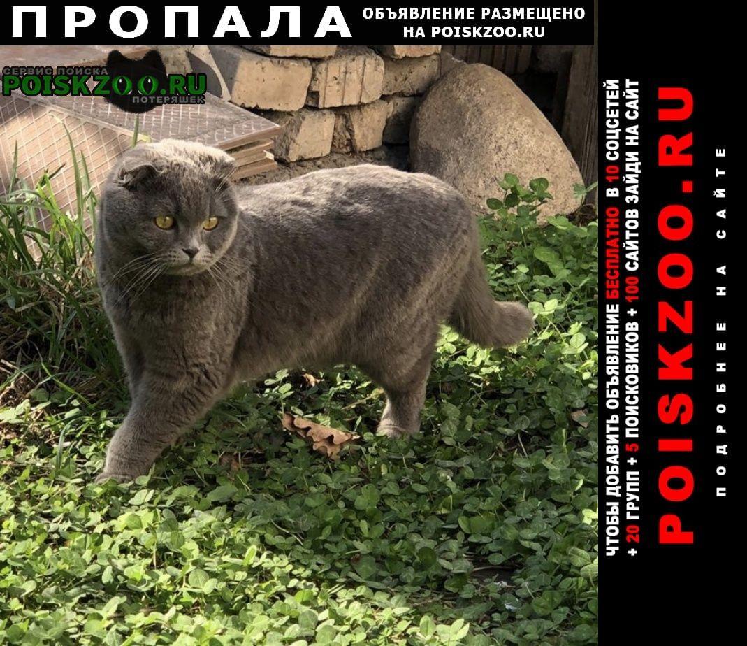 Пропала кошка Бишкек