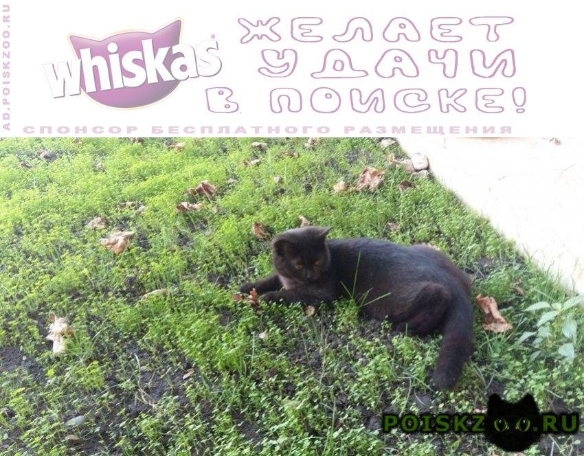 Пропал кот черный британец г.Краснодар