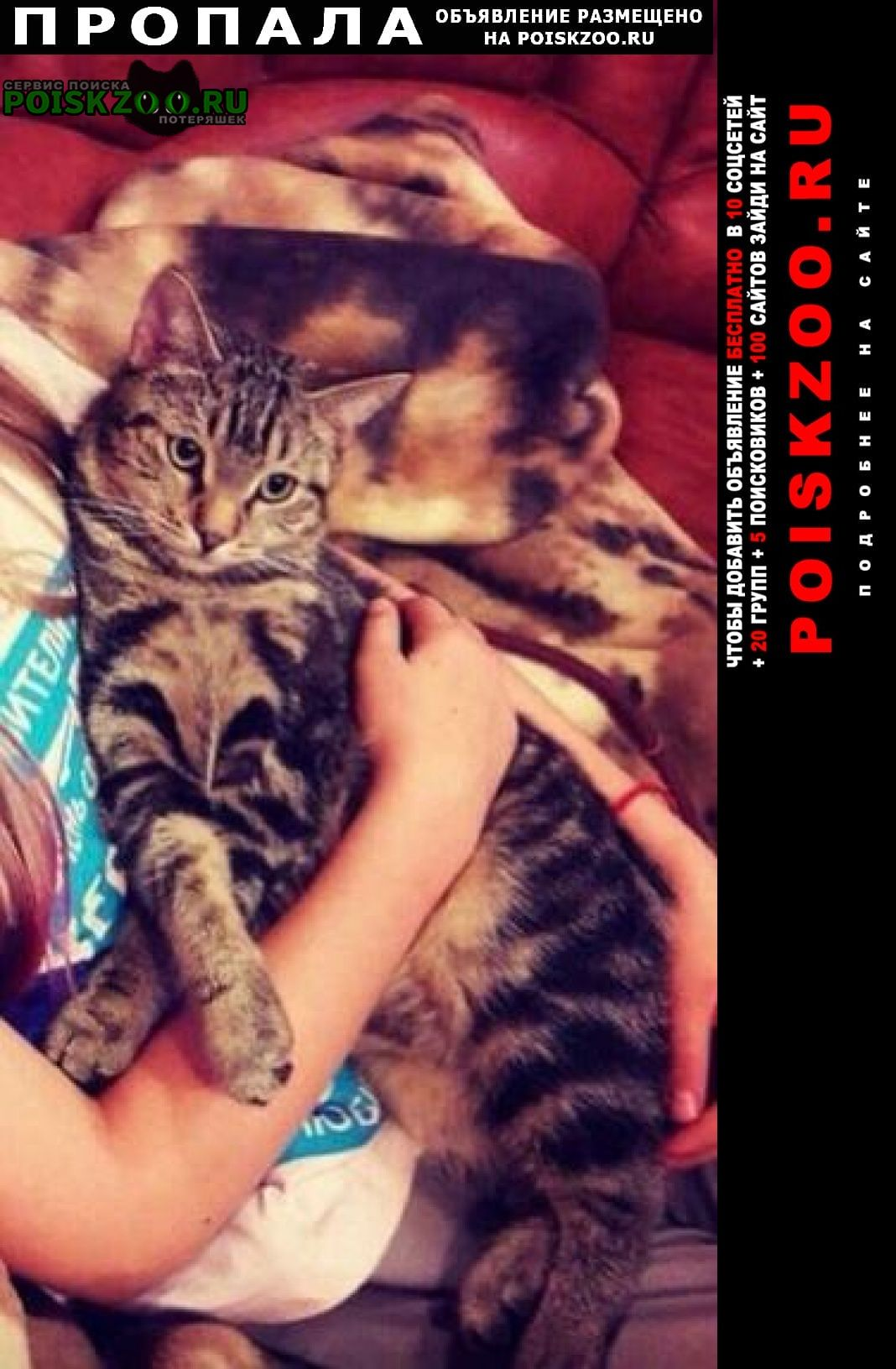 Волосово Пропала кошка кот