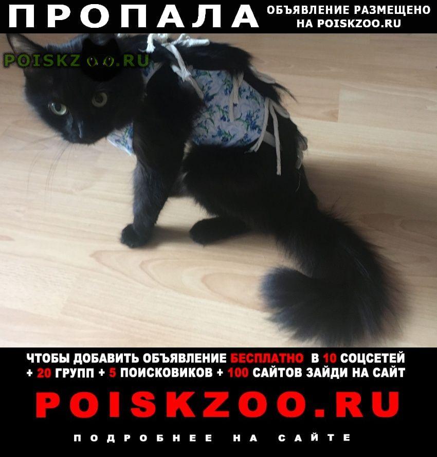 Пропала кошка черная с пушистым хвостом г.Москва