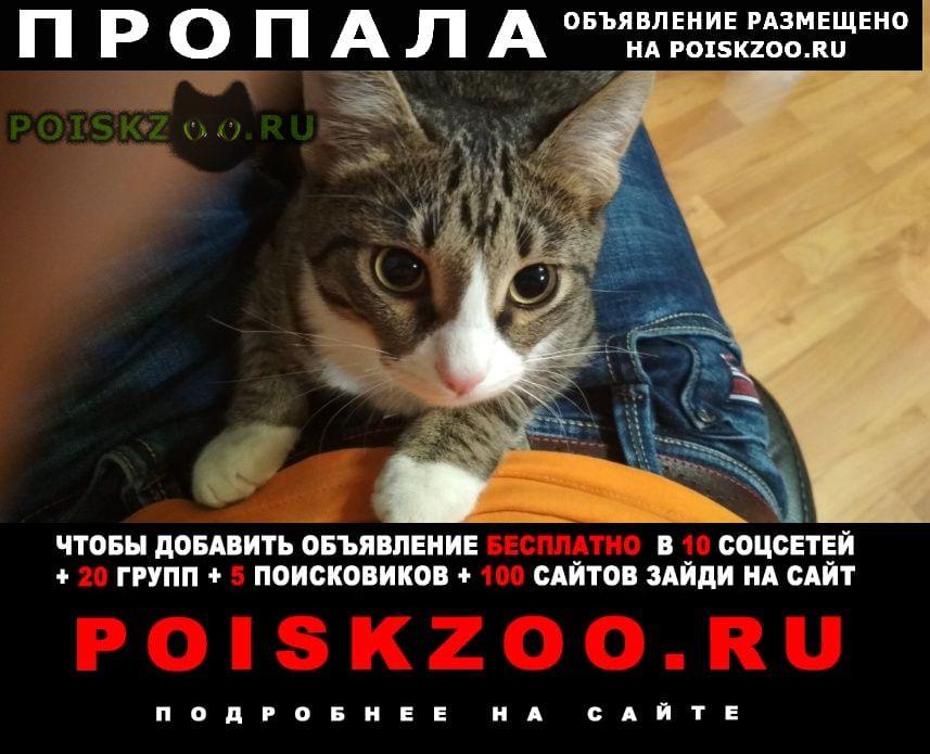 Пропал кот енок-мальчик г.Нижний Новгород