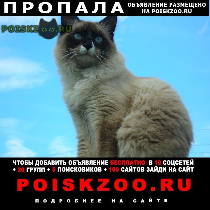 Пропал кот Железнодорожный (Московск.)