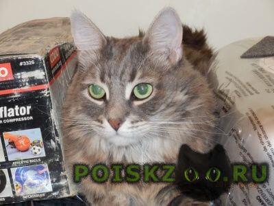 Пропал кот г. г.Таганрог