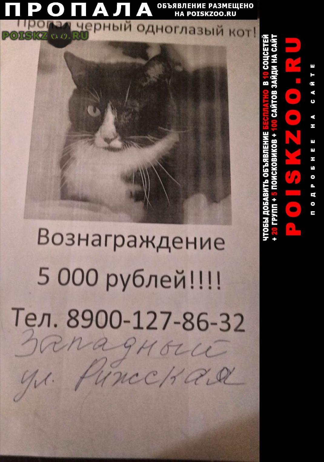 Пропала кошка Ростов-на-Дону