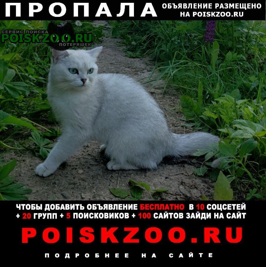 Пропала кошка британская шиншилла Калининец