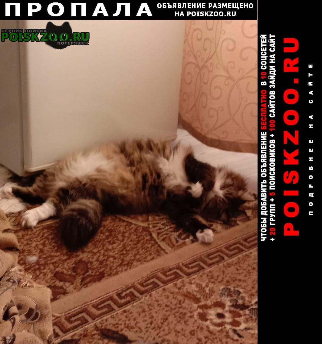 Пропал кот в районе магазина заря Омск