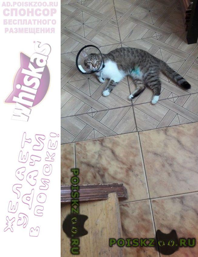 Пропала кошка кошечка г.Москва