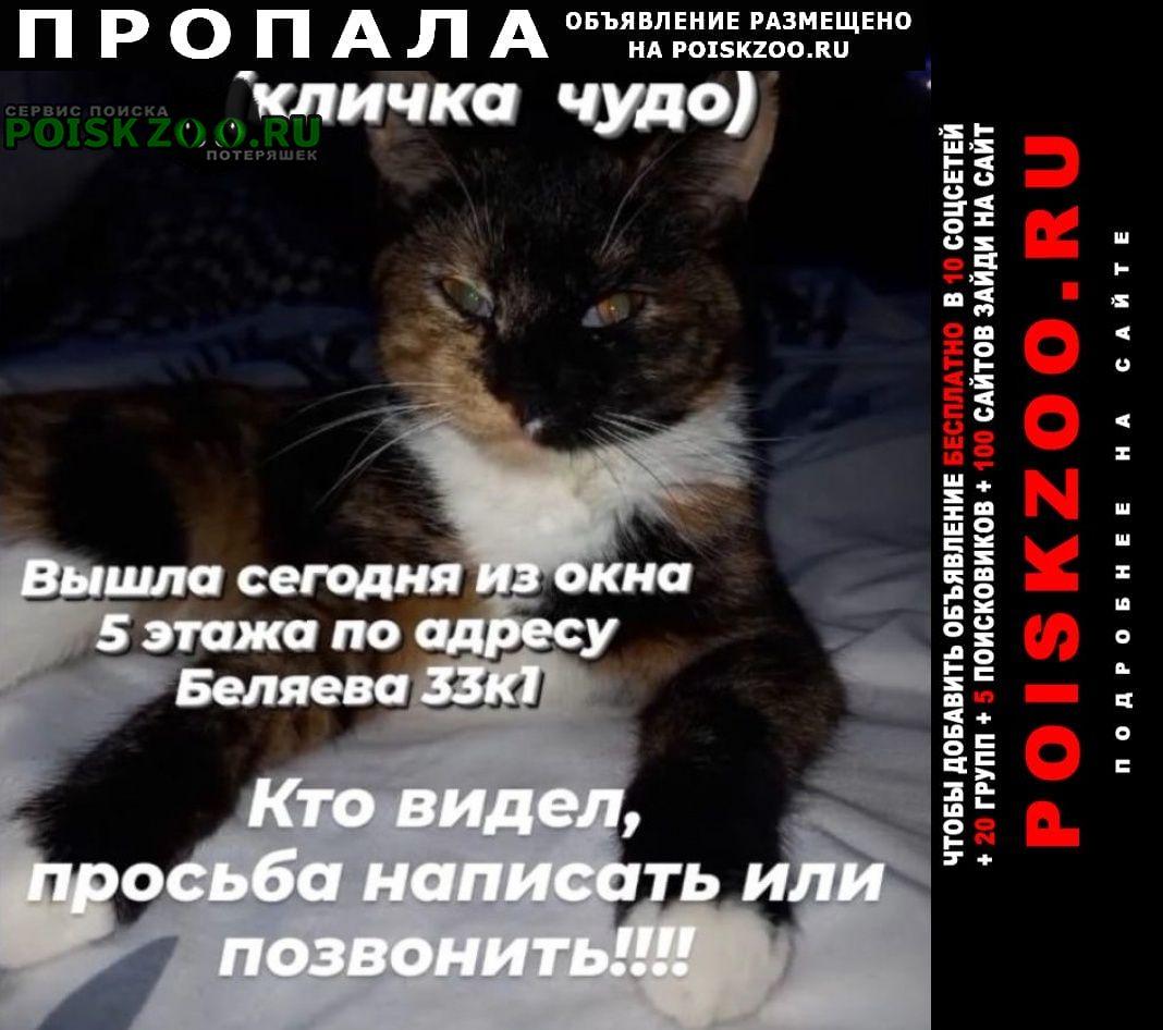Тюмень Пропала кошка кошечка