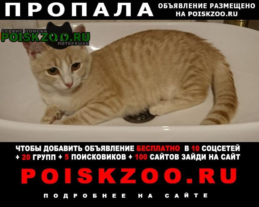 Пропала кошка рыжий котик Малаховка