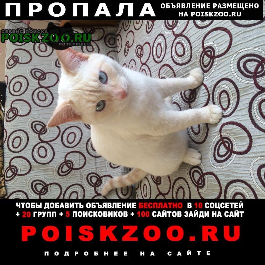 Пропал кот молодой красивый г.Омск