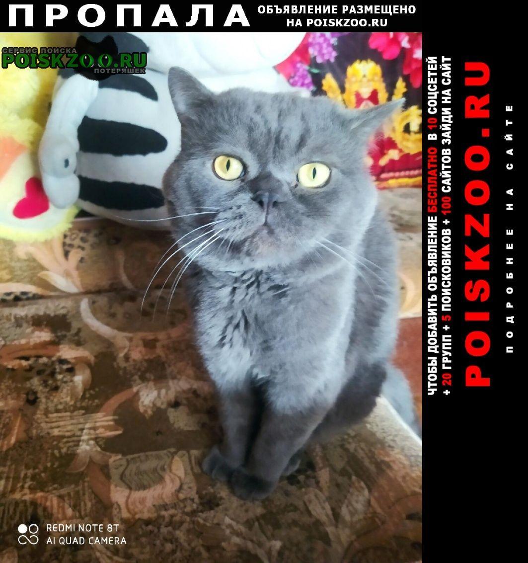 Пропал кот Барнаул