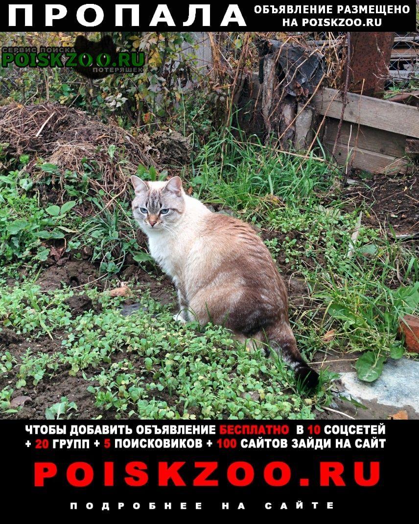 Пропал кот Вязьма