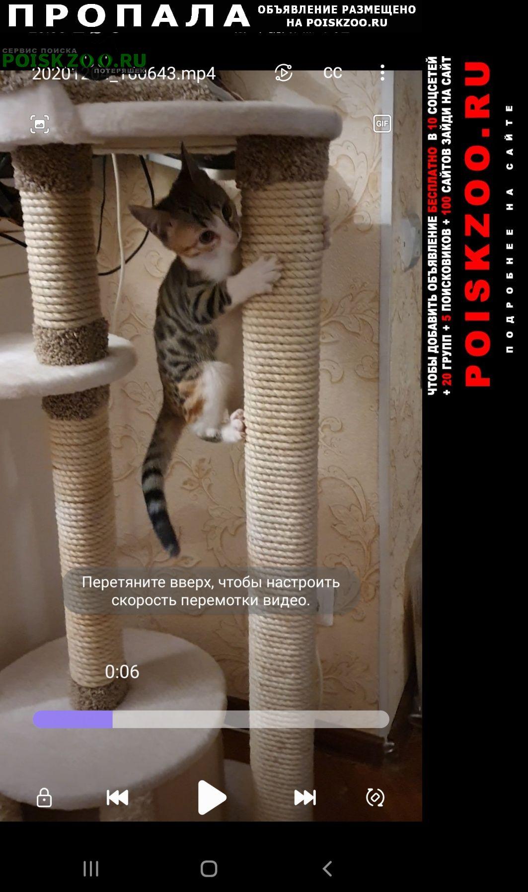 Пропала кошка помесь бенгалки и дворянина м выхино Москва
