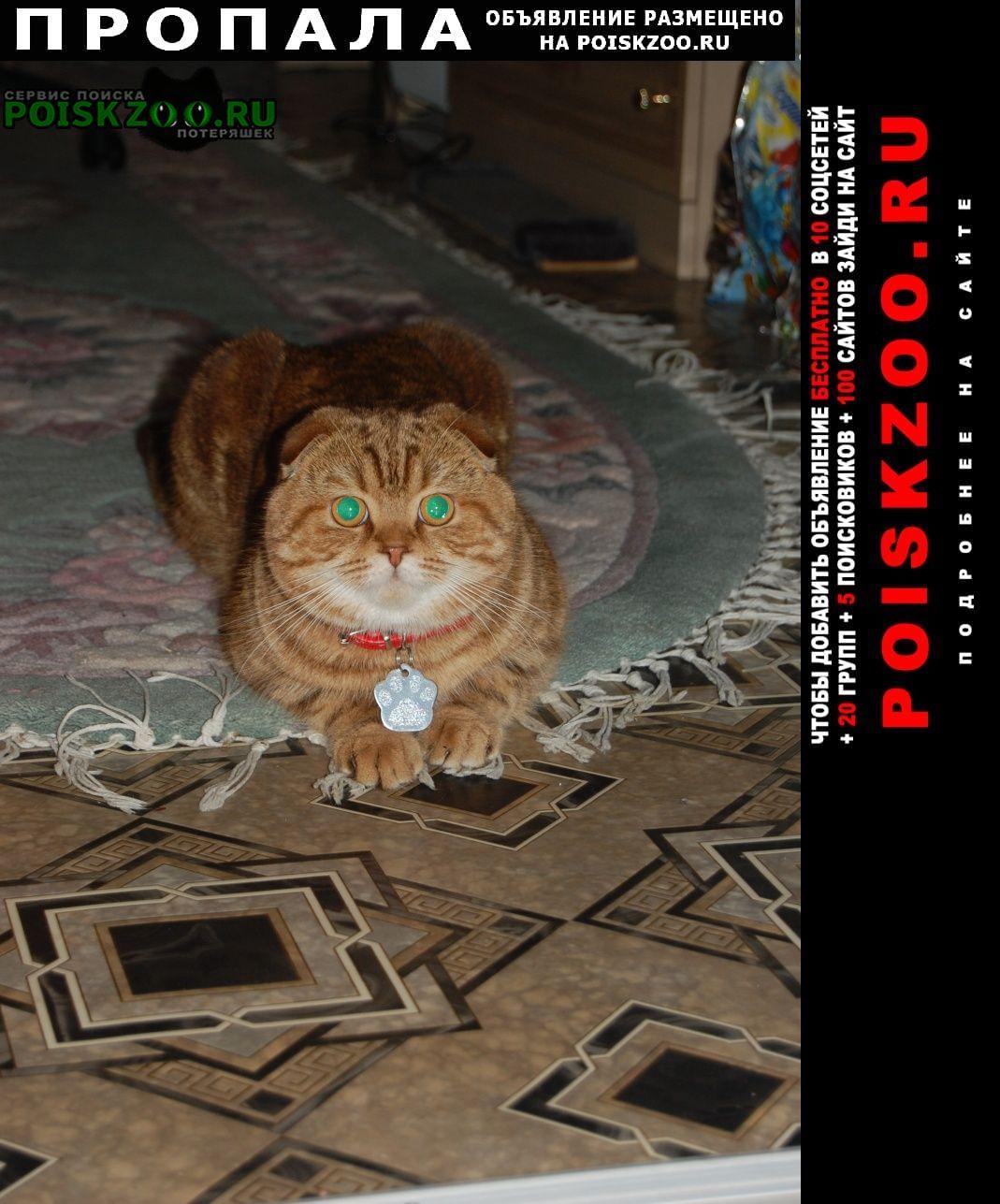Пропал кот шотландской породы г.Бондари
