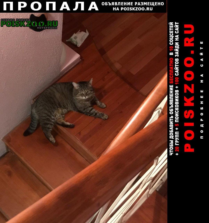 Пропал кот. д. осоргино Лесной Городок