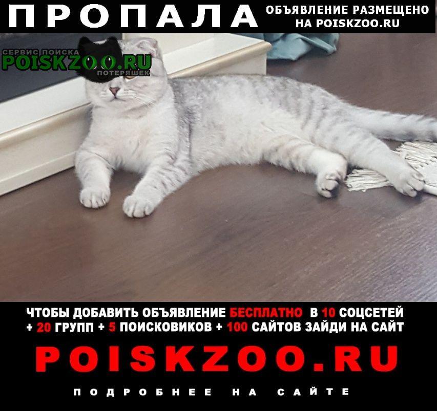 Пропала кошка пожалуйста помогите найти кошку Москва