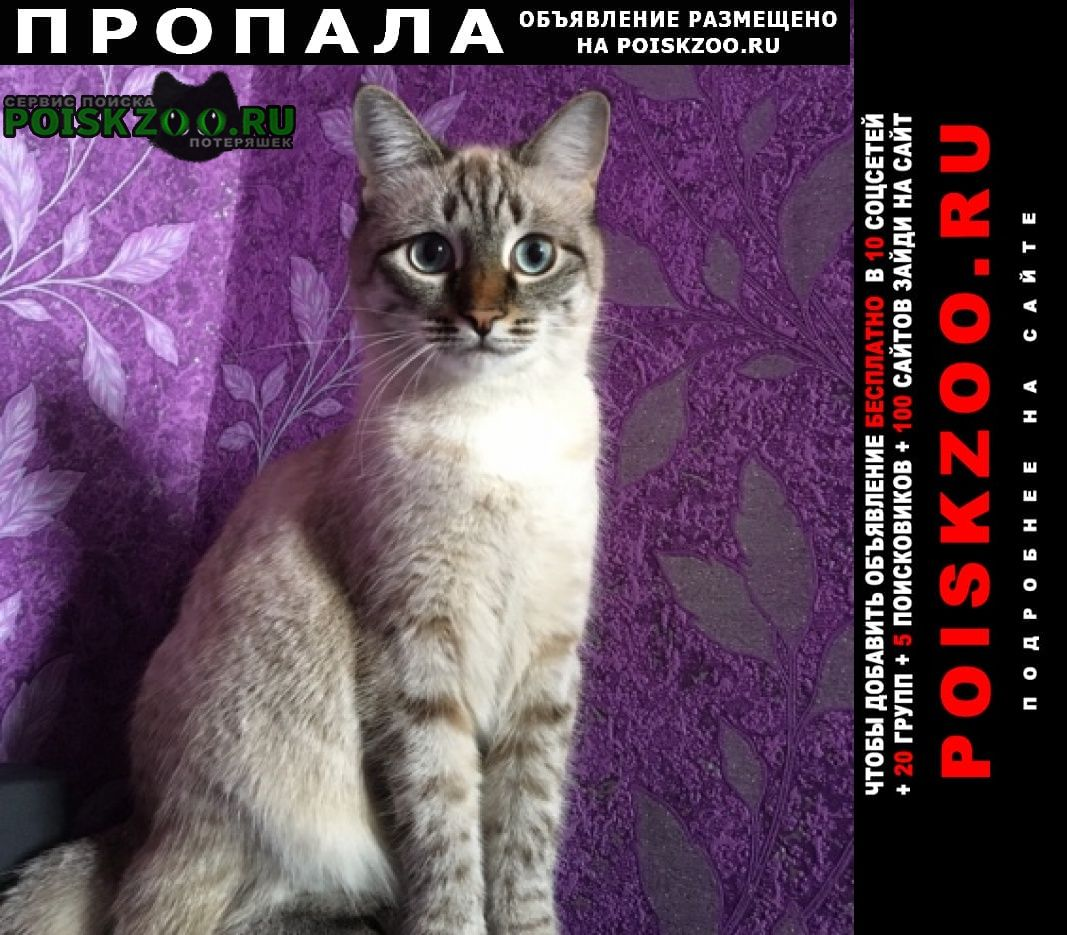 Пропала кошка выпала из окна на запорожской Самара