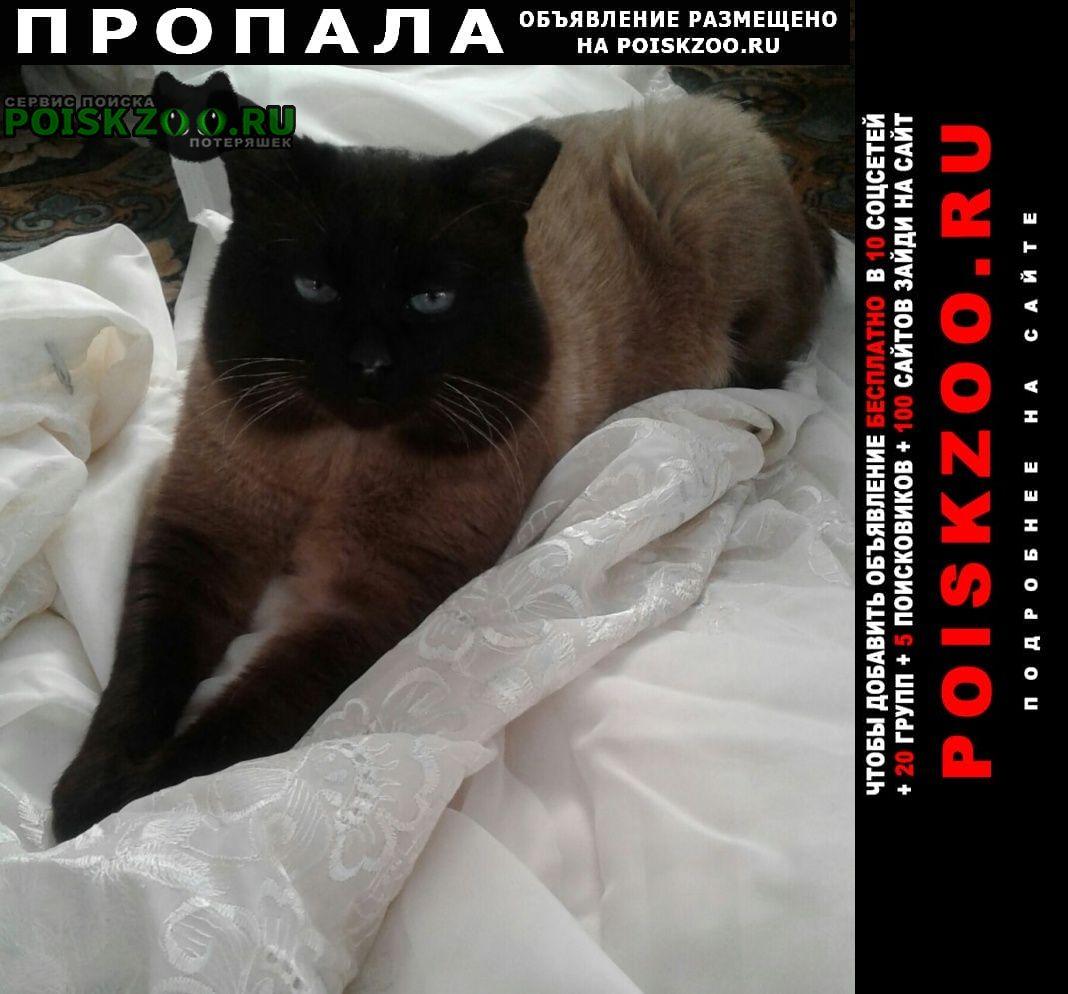 Пропала кошка кот максик Сочи