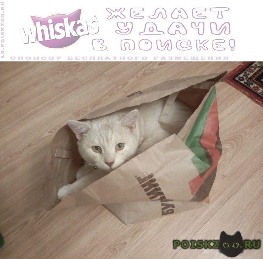 Пропала кошка кот комарово г.Тюмень