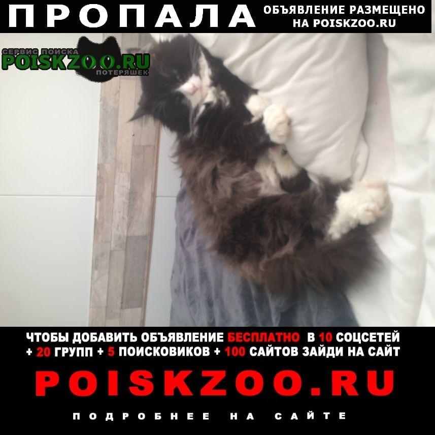 Москва Пропал кот помогите найти на ул грина 1