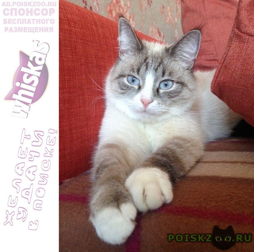 Пропал кот в районе текстильщики г.Москва