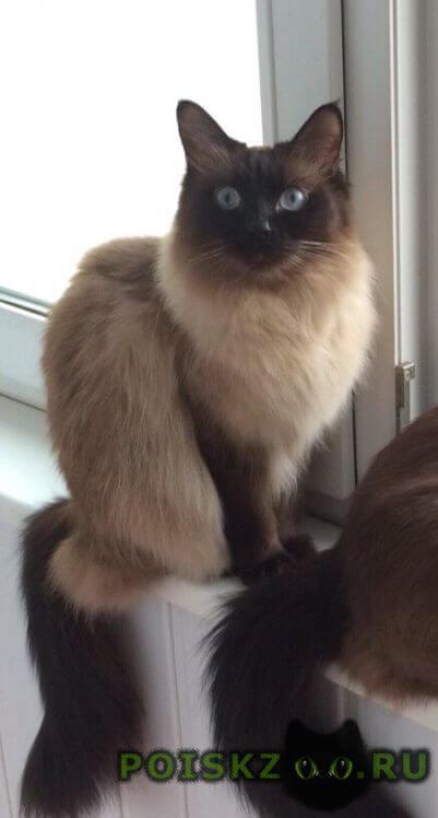 Пропала кошка в трехгорке г.Одинцово