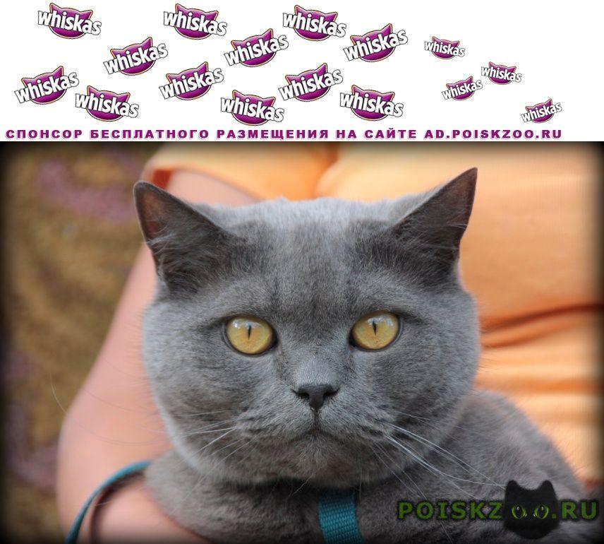 Пропал кот г.Рыбинск