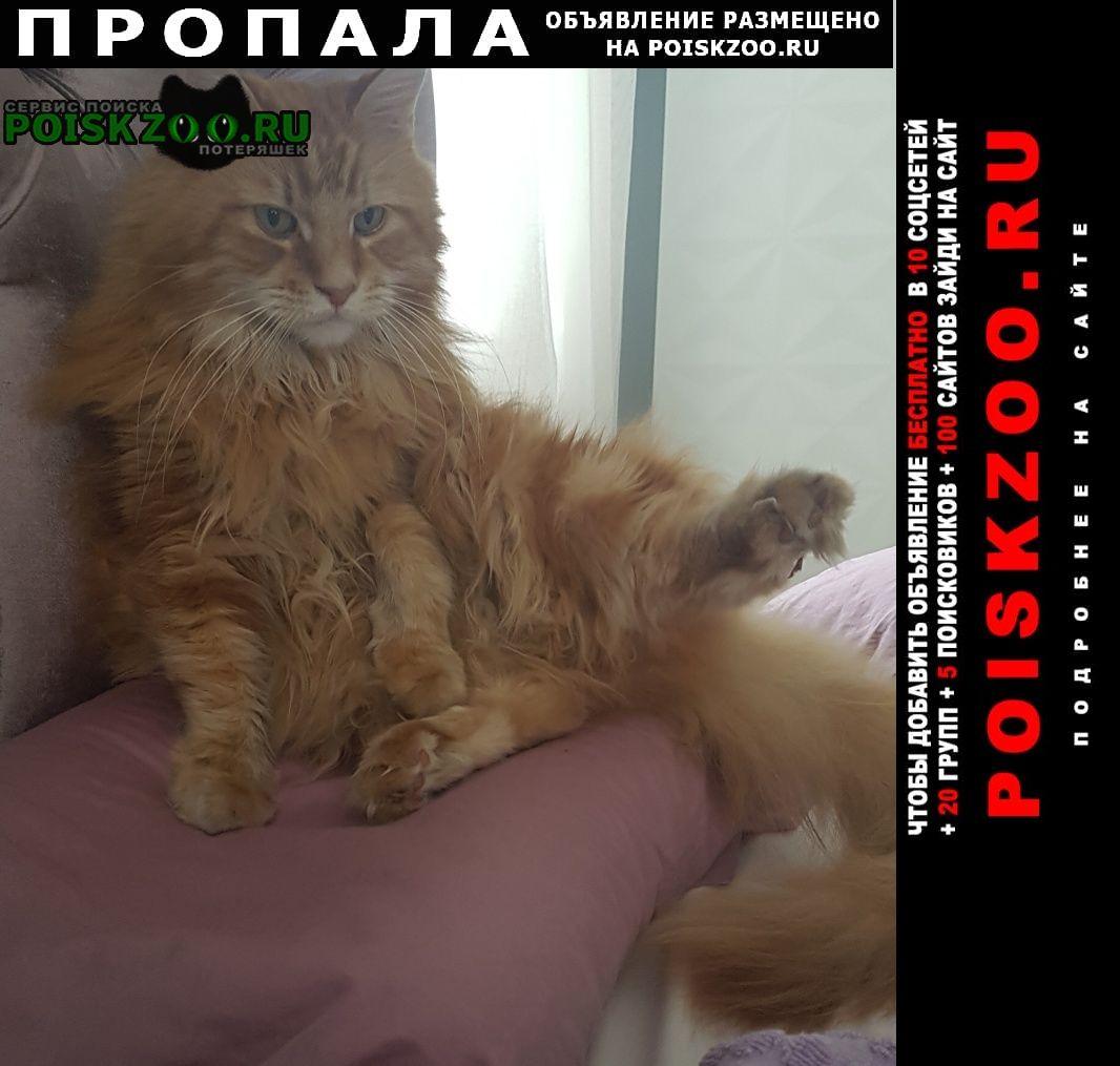 Пропала кошка рыжий мейн-кун Москва