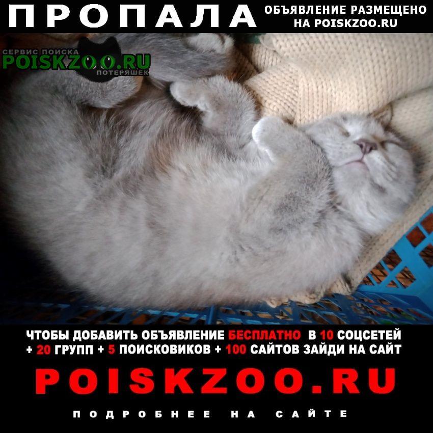 Пропал кот молодой ик вислоухий голубого окраса Москва
