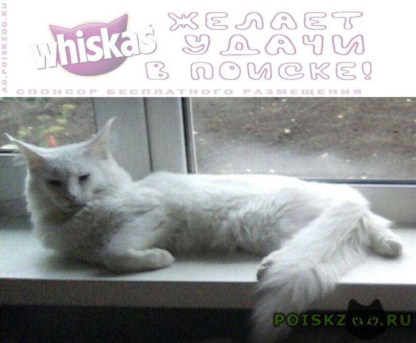 Пропала кошка г.Ижевск