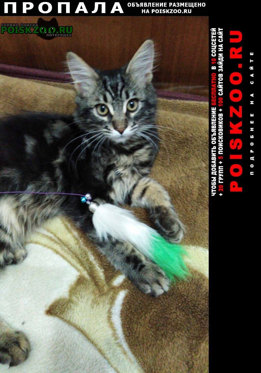 Пропала кошка кот мейн-кун Кольчугино