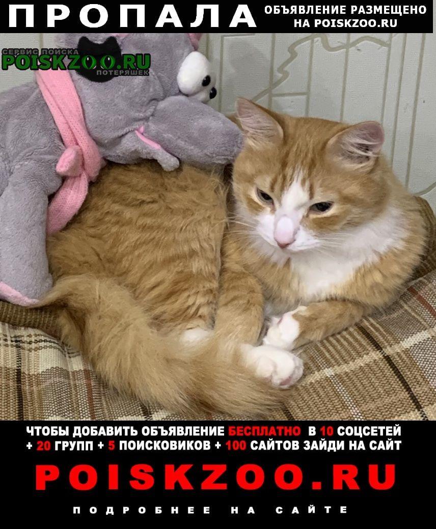 Пропал кот кличка симба, рыжий пушистый. район ггм. Нижний Тагил
