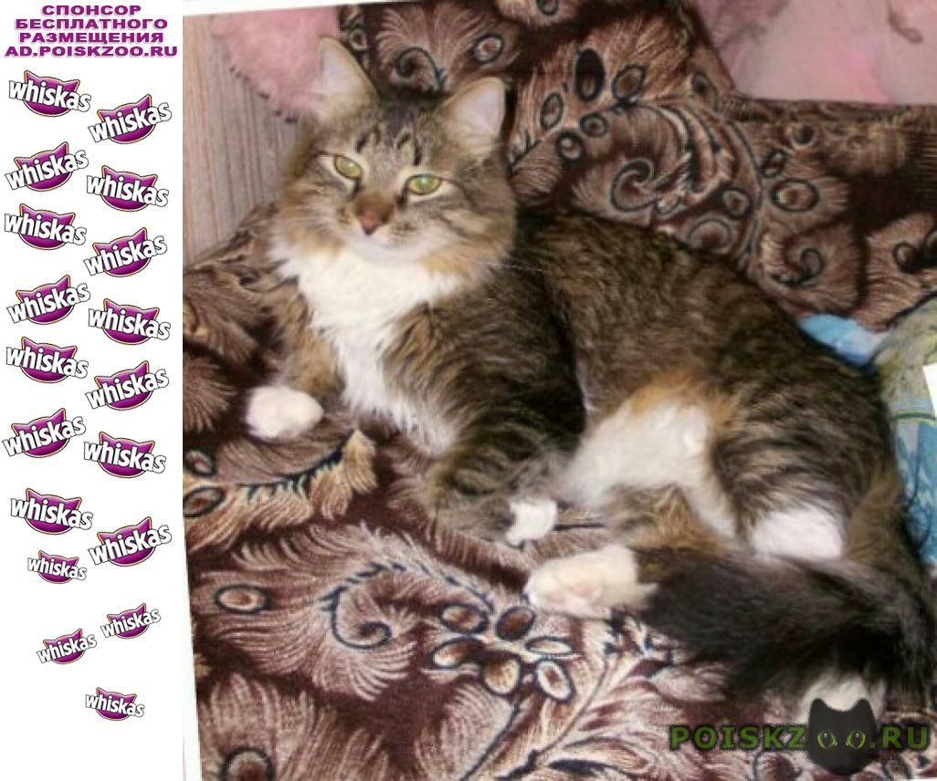 Пропал кот любимец г.Владимир