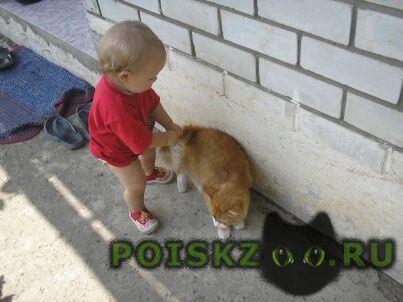 Пропал кот рыжий пушистый г.Краснодар