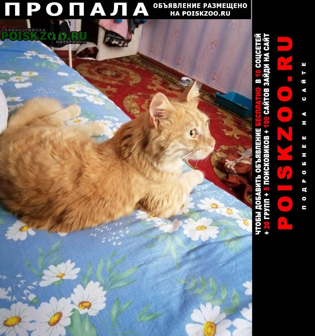 Пропала кошка кот. не появлялся дома уже 2 дня. Анапа