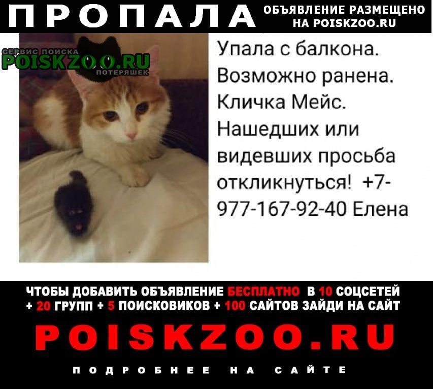 Пропала кошка Москва